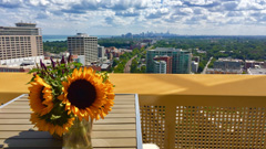 Optima Views Signature Homes -Luxury Evanston condos 847-312-1014