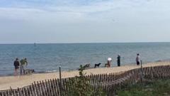 Man's Best Friend Evanston Dog Beach Optima Views 847-312-1014